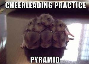 Animal pictures: 20 Hilarious animal pictures with ...