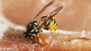 Was Essen Wespen : angriff aufs grillfleisch haben wir eine wespen plage n ~ Frokenaadalensverden.com Haus und Dekorationen