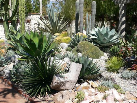 My Carolina Yard: The Year of the Succulent: Tips for ...