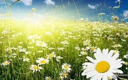 Daisy Colors Fanpop Daisies Background Desktop Daisys