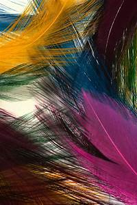 Colorful, Feathers, Most, Beautiful, Hd, Wide, Mobile, Wallpaper