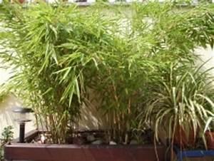 Immergrüne Winterharte Kübelpflanzen : mediterrane k belpflanzen winterharte pflanzen f r k bel ~ Michelbontemps.com Haus und Dekorationen