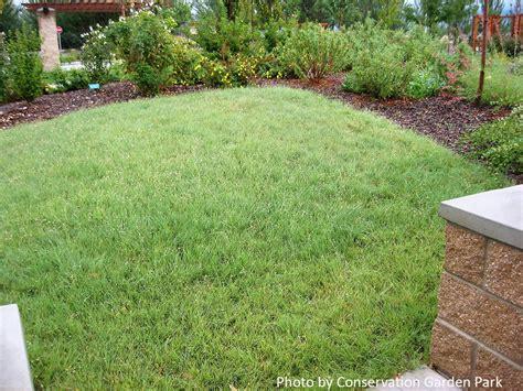 Buffalo Grass Seed Blend