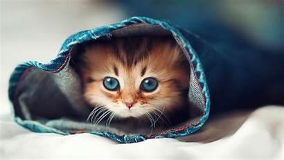 Cat Desktop Cats Background Wallpapers Backgrounds Wallpaperaccess