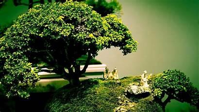 Tree Bonsai Desktop Background Pixelstalk