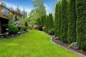 Dekorative Bäume Für Kleine Gärten : immergr ne b ume als zierde und sichtschutz garten pinterest b ume f r den garten ~ Markanthonyermac.com Haus und Dekorationen