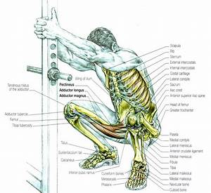 How To Stretch Prior To Squat Exercises
