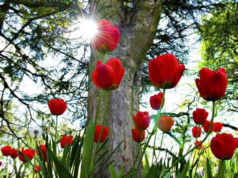 Red Flower Hd Wallpapers For Desktop 3 Widescreen