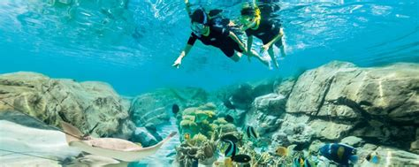 Discovery Cove Orlando Tickets by Discovery Cove Tickets Orlando Theme Parks