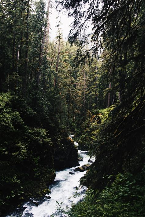 Aesthetic Nature Wallpaper by Aesthetic Wallpapers 32 Best Free Wallpaper Forest