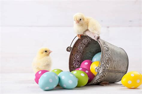 easter stock  pictures royalty  images istock