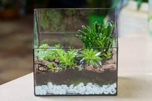 Pflanzen Terrarium Einrichten : sukkulenten im terrarium halten pflanz und pflegetipps ~ Orissabook.com Haus und Dekorationen