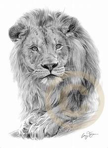 AFRICAN LION Art Pencil Drawing Print A4 signed Ltd ...