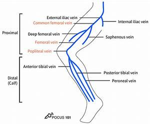 Dvt Ultrasound Made Easy  Step-by-step Guide