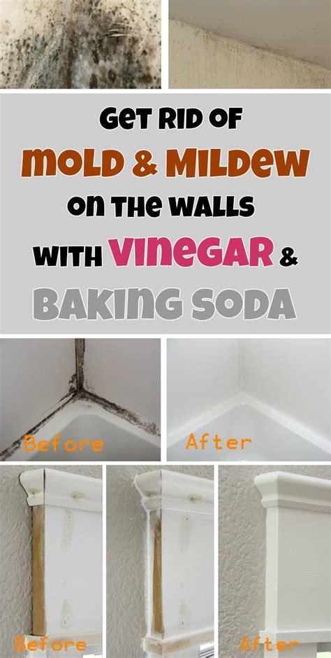 rid  mold mildew   walls  vinegar