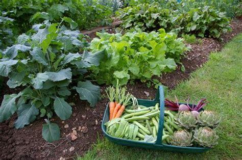 organic kitchen garden ปล กผ กสวนคร วเกษตรอ นทร ย สร างรายได เย ยมกว าท ค ด 1227