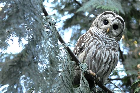 A Hoot Of A Story In Longbranch