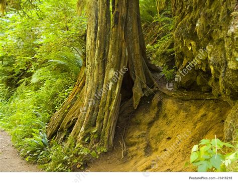 plants hollow tree trunk stock picture