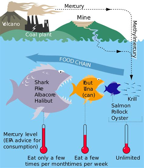 mercury  fish wikipedia