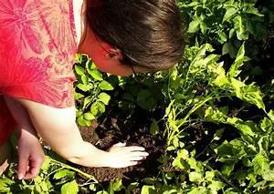 Ab Wann Erdbeeren Pflanzen : ab wann kann man erste fr hkartoffeln ernten etwa zur bl te des krautes kartoffeln zupfen ~ Eleganceandgraceweddings.com Haus und Dekorationen