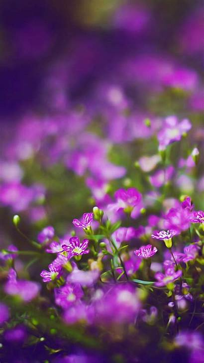 Flowers Flower Purple Iphone Backgrounds Wallpapers Field
