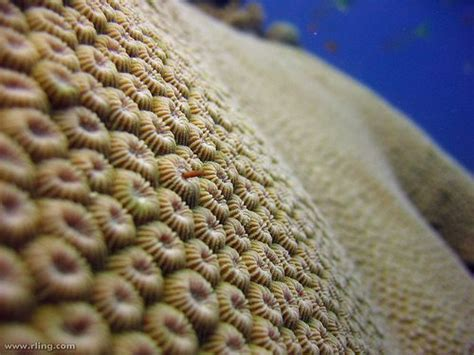Types Of Coral (part 1- Hard Coral