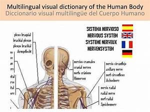 Human Body - Cuerpo Humano