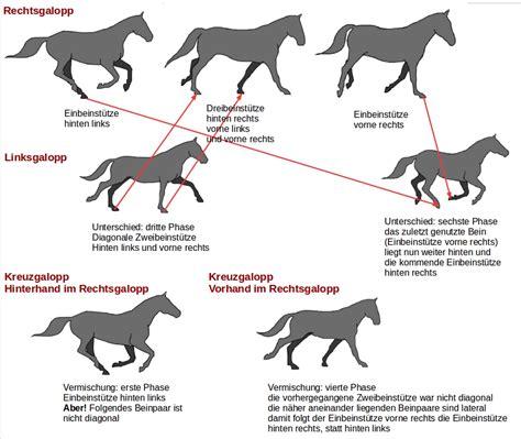 Pferd Gymnastizieren übungen