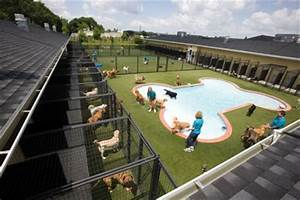 pet hotels welcome to the dog house peter greenberg With the dog house pet resort