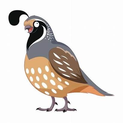 Quail Cartoon Clipart Quaglia Clip Bird Fumetto