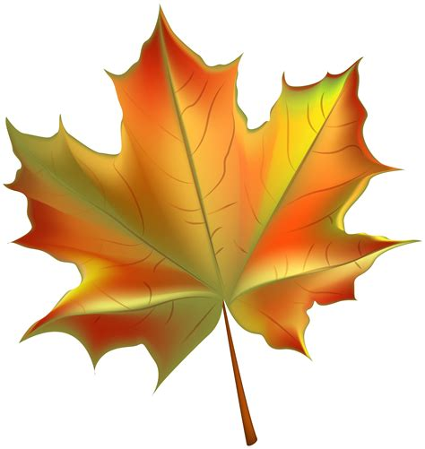 Maple Leaf Clipart Transparent Background Collection
