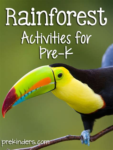 animals activities and lesson plans for pre k and 386 | rainforest theme activities preschool