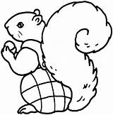 Squirrel Coloring Pages Outline Animals Forest Flying Clipart Para Colorear Ardilla Cartoon Clip Cliparts Wildlife Activity sketch template