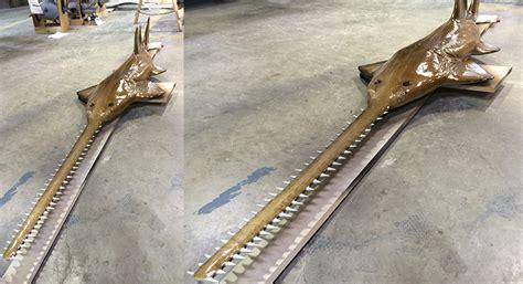 sawfish trophy fish custom shark mount mounted rooster fishing graytaxidermy