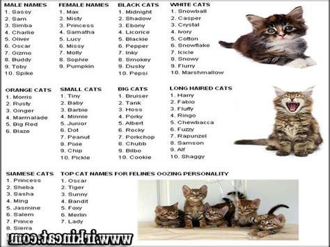 top unique male kitten names guide irkincatcom