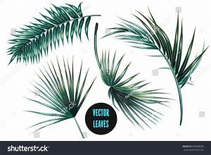 Vector Tropical Palm Leaves Jungle Leaves Stock Vector ...