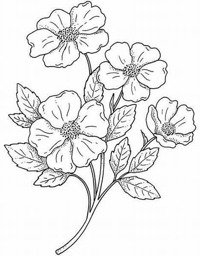 Flores Pintar Dibujos Colorear Coloring Flowers Tela