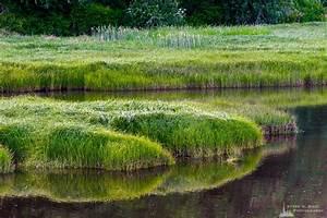 Grass, Cedar, River, Estuary, Pacific, County, Washington, 2018