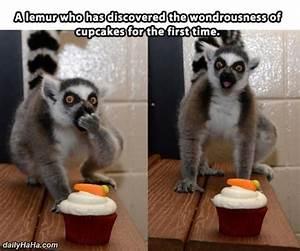 Lemur Enjoying ... Cute Lemur Quotes