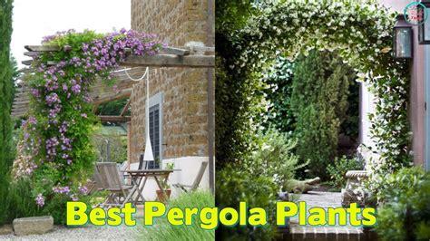 best pergola plants 19 best pergola plants climbing plants for pergolas and arbors youtube