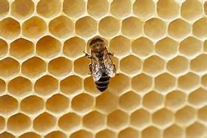 Wie Machen Bienen Honig : das jahr der bienen auch bei ihnen zu hause gu ~ Whattoseeinmadrid.com Haus und Dekorationen
