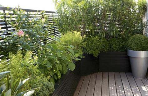 des plantes grimpantes pour balcon et terrasse on est toujours dans le jardin archzine fr