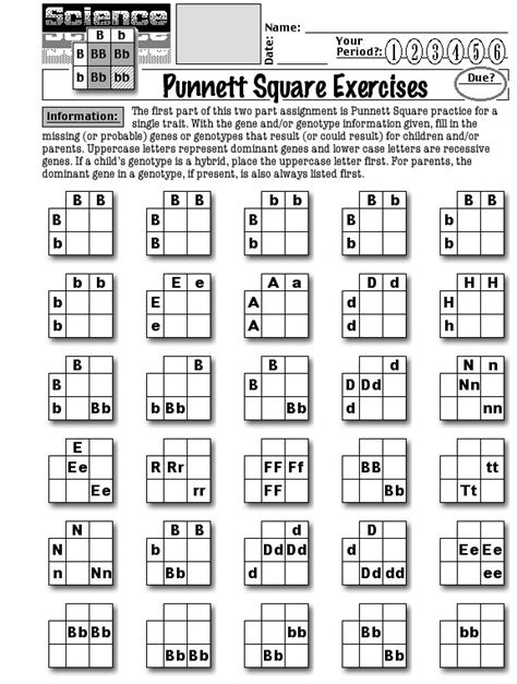 15 Best Images Of Punnett Square Worksheet Answer Key  Punnett Square Worksheet 1 Answer Key