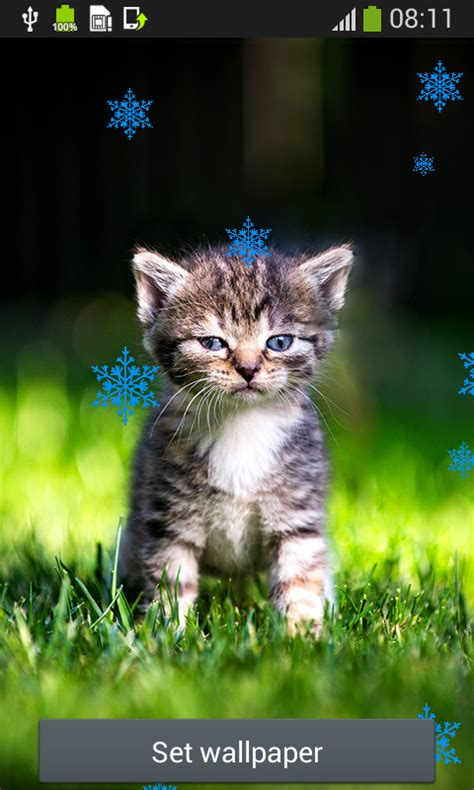 Cat Live Wallpapers Free Apk Android App  Android Freeware