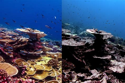Window to Save World's Coral Reefs Closing Rapidly