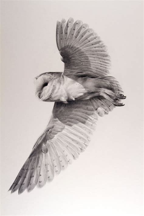 flying barn owl drawing owl tattoos search and owl on