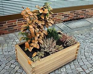 Immergrüne Pflanzen Winterhart Kübel : k belbepflanzung pflanzen f r die k belbepflanzung als ~ Lizthompson.info Haus und Dekorationen