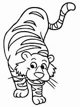 Tiger Coloring Pages Printable Tigers Cartoon Tracing Animals Clipart Printables Animal Cliparts Face Worksheets Drawing Cat Cub Freecoloring Library Safari sketch template