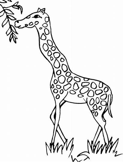 Giraffe Coloring Colorear Printable Drawing Clipart Pintar