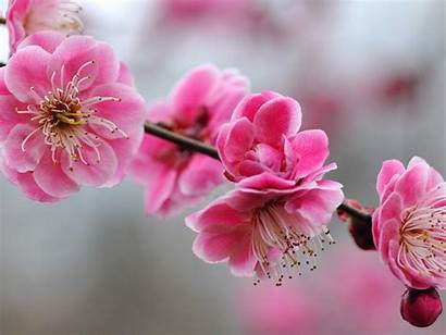 Girly Wallpapers Pink Backgrounds Flowers Fantastic Imagenes